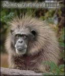 Février, le plus court des mois, est de tous le pire à la fois. - Page 18 Lundi-singe-429f6fa