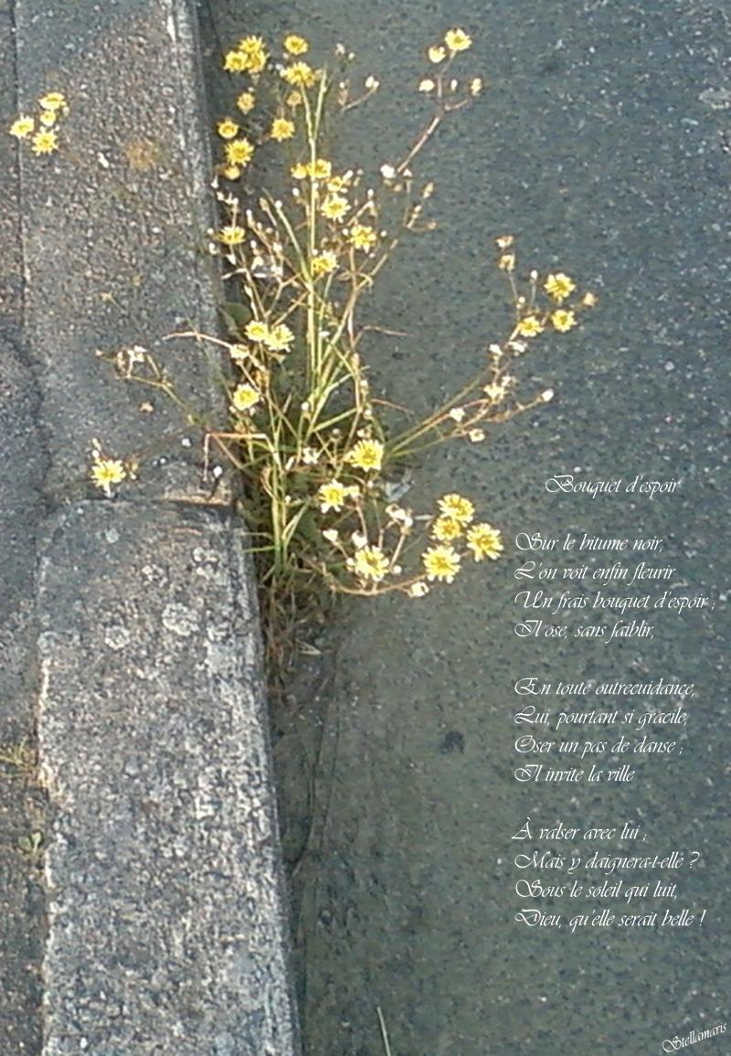 Bouquet d'espoir / / Sur le bitume noir, / L'on voit enfin fleurir / Un frais bouquet d'espoir ; / Il ose, sans faiblir, / / En toute outrecuidance, / Lui, pourtant si gracile, / Oser un pas de danse ; / Il invite la ville / / À valser avec lui ; / Mais y daignera-t-elle ? / Sous le soleil qui luit, / Dieu, qu'elle serait belle ! / / Stellamaris