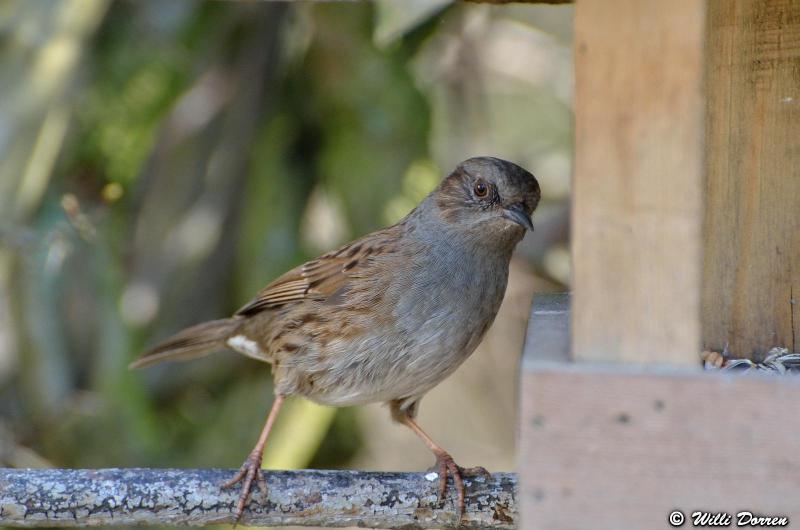 oiseaux de mon jardin Dpp_-oiseaux-3--0014-418ee50